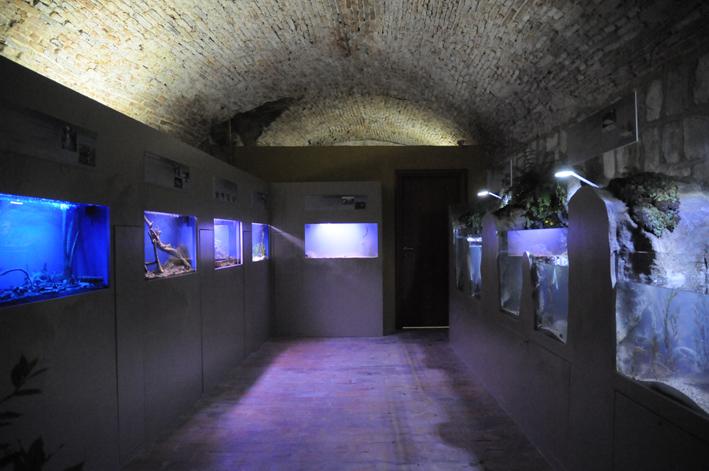Acquario Bolsena