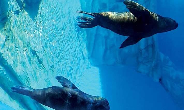 SeaLife Gardaland Peschiera del Garda