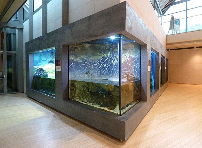 """Museo di storia naturale """"MUSE"""" – Trento"""